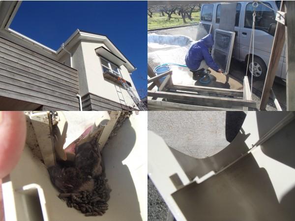 窓ガラスのお掃除とコウモリ対策