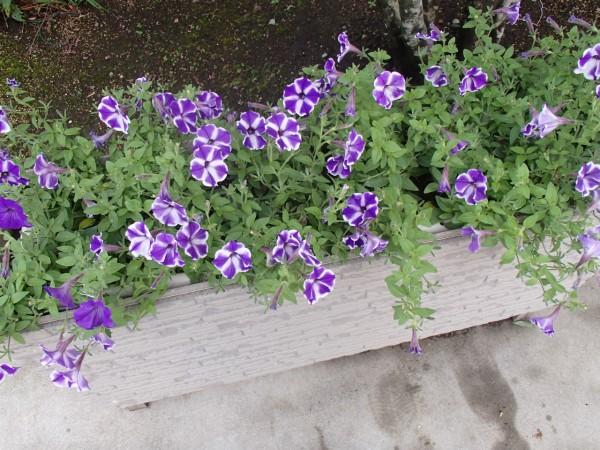 花が収まりました