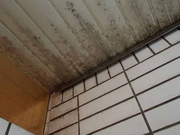 浴室天井・壁のカビ