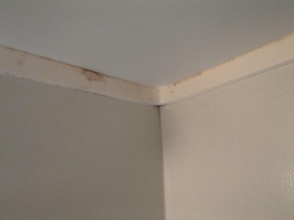 浴室天井付近のビート