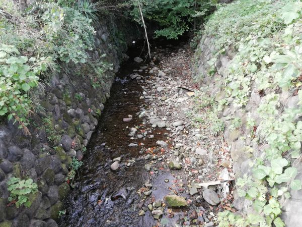 水遊びできそうな川