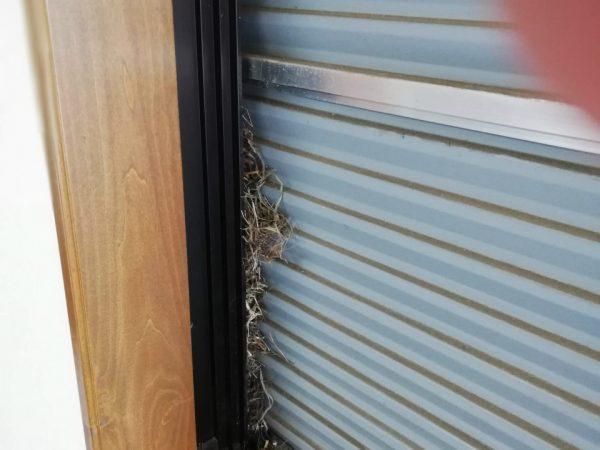鳥が巣を作った窓
